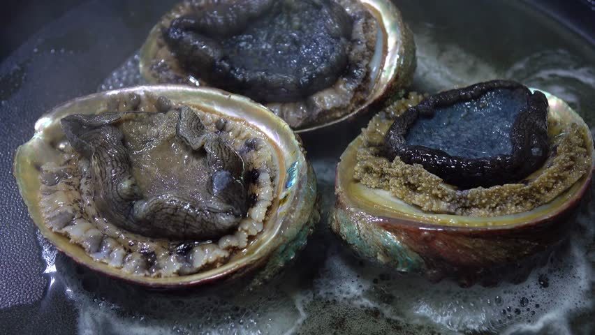 abalone dictionary definition