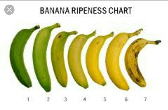 artificial ripening of fruits by ethylene pdf
