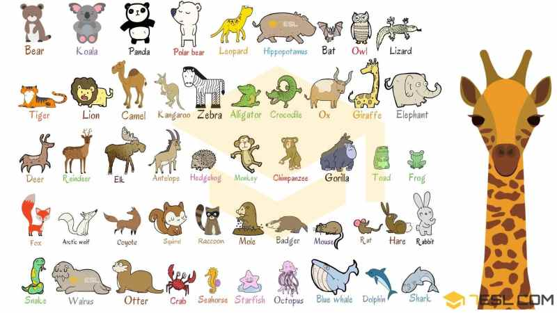 animals name with picture pdf