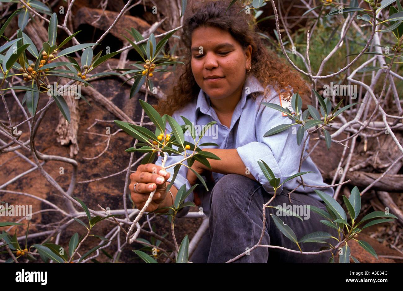 australian bush tucker guide
