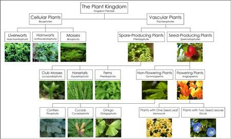 classification of plants and animals pdf