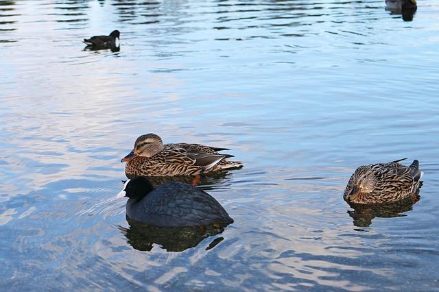 black duck documentation