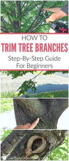 citrus tree pruning guide
