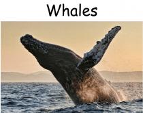 beautiful creatures book online free pdf