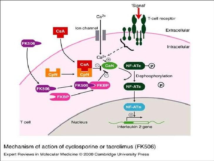 azathioprine mechanism of action pdf