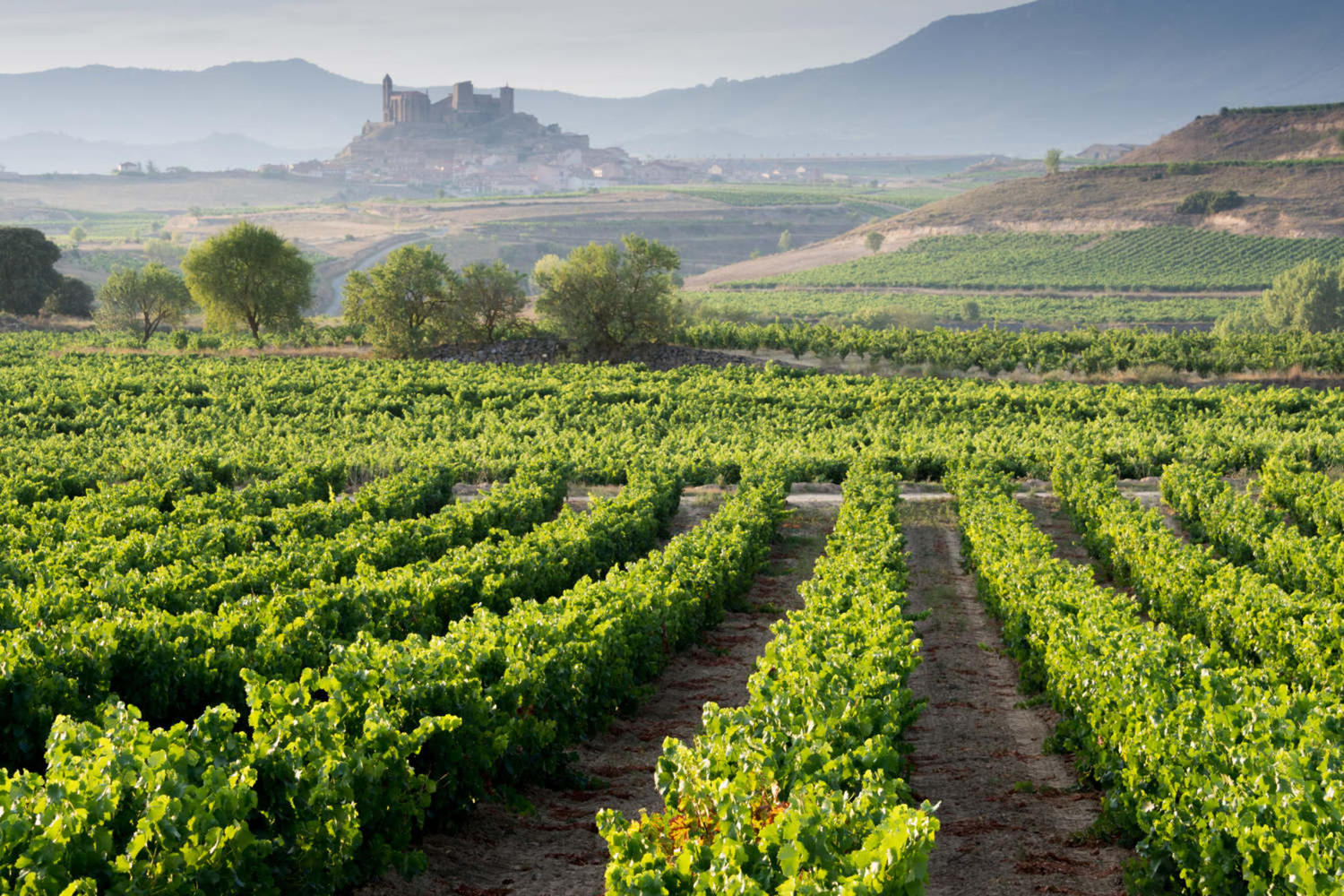 a guide to rioja