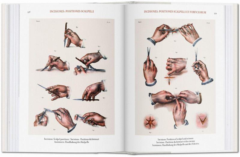 bourgery atlas of human anatomy and surgery pdf