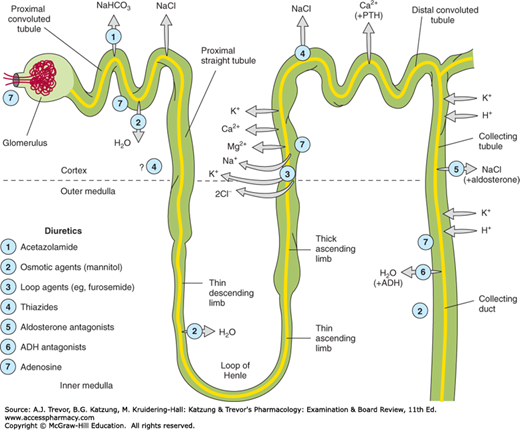 carbonic anhydrase inhibitor mechanism of action pdf