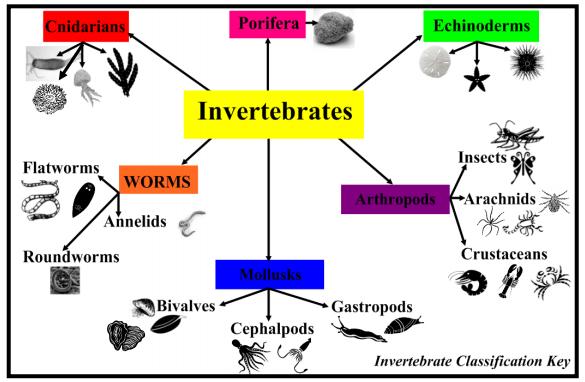 classification of invertebrates pdf