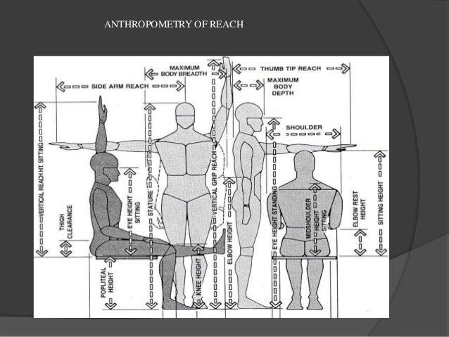 anthropometrics in architecture pdf