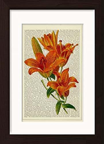 dictionary saffron
