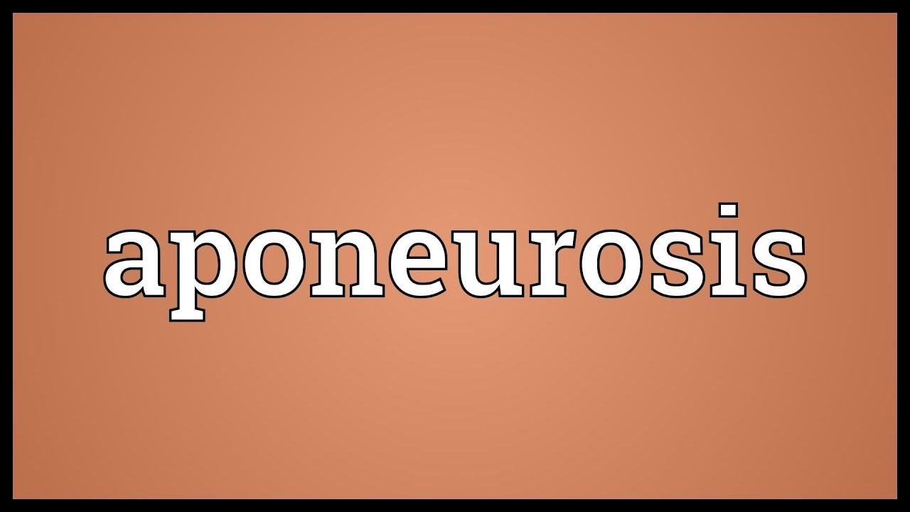 dictionary nervelessness